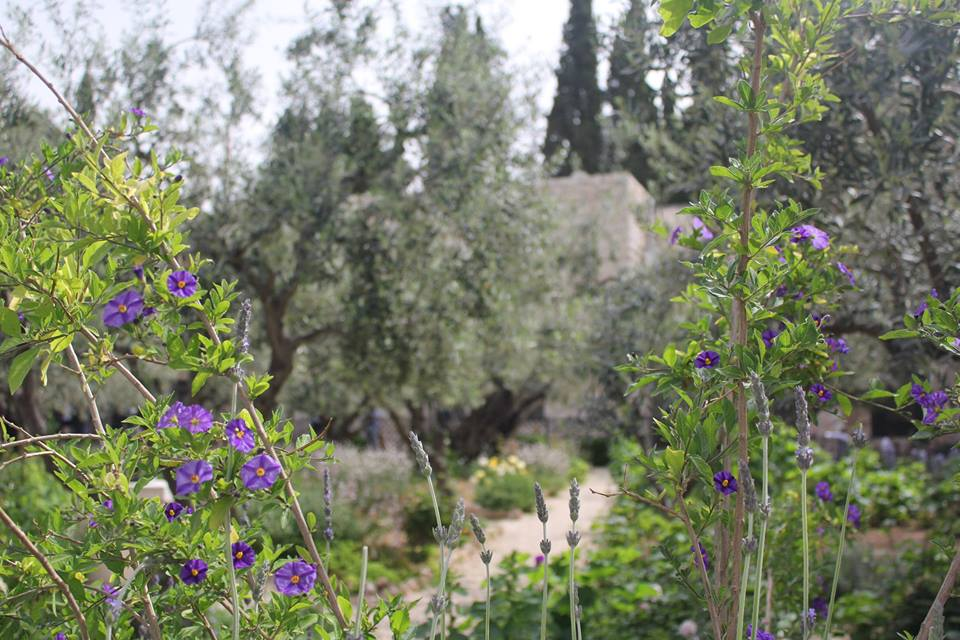 8_4_The_Garden_of_Gethsemane_1